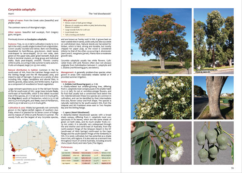 Smaller Eucalypts for Planting - Corymbia calophylla.html